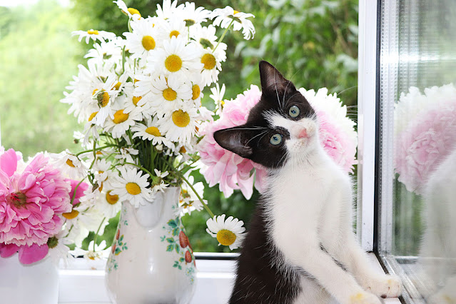 A curious kitten by some vases of flowers. Being kind to people and to pets can change the world; here's why.