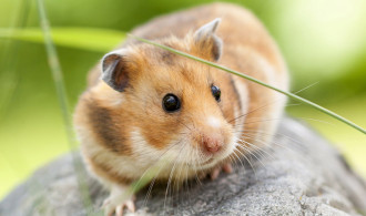 5 Cara Menjinakkan Hamster Galak agar Bisa Dipegang Manusia