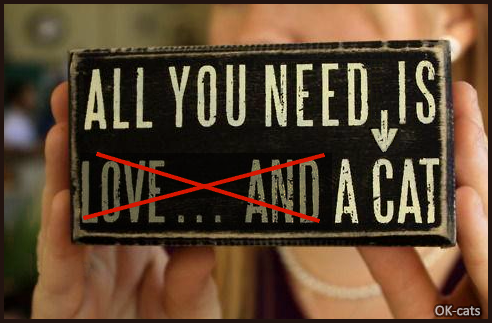 Photoshopped Cat picture • All you need is love and a Cat. Nope, all you need is a cat, because CAT IS LOVE! ♥