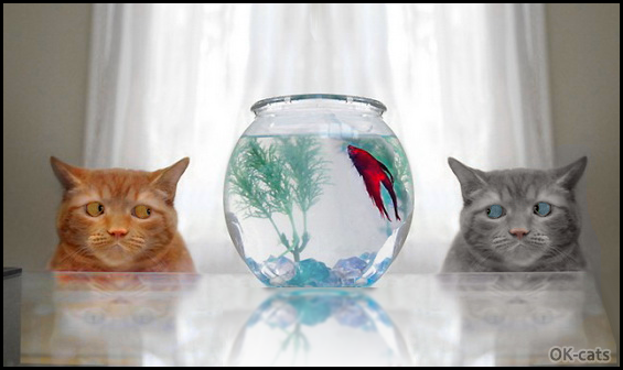 Photoshopped Cat picture • Dramatic lunch: only one fish for two hungry cats