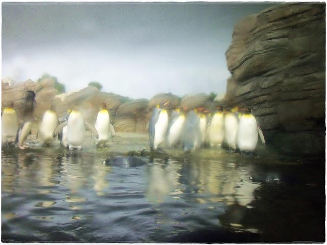 Pinguins no Rotterdam Zoo - novocaroneiro.com