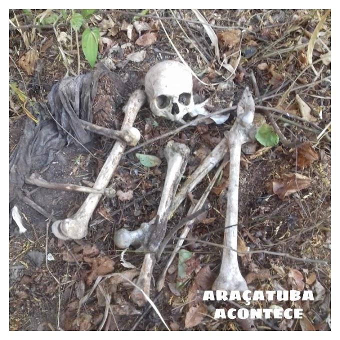 Ossada humana é encontrada perto da rodovia SP-463, em Aracanguá