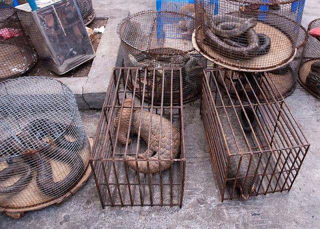 łuskowce targi zwierząt