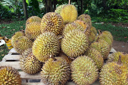 Tales From the Big Durian