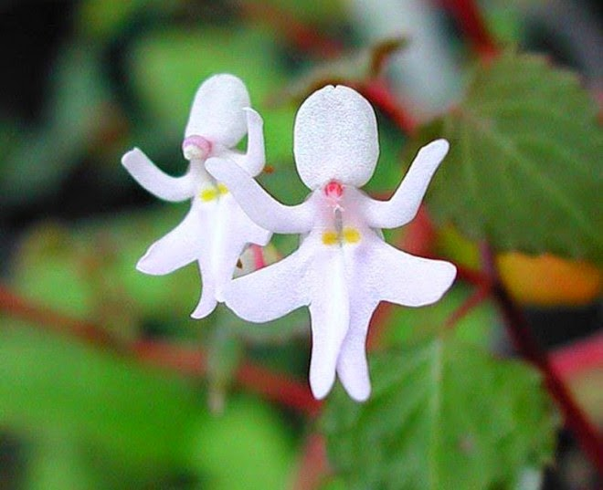 20+ Amazing and Weird Flowers Which Will Make You Laugh
