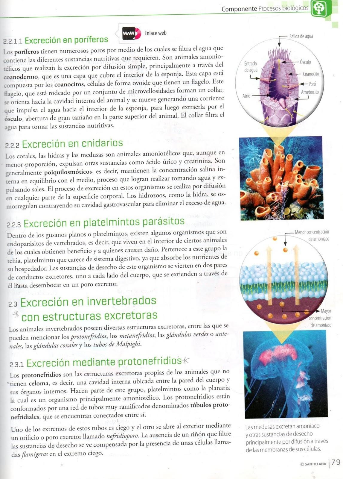 JORGE CIENCIAS NATURALES : material de apoyo para el..