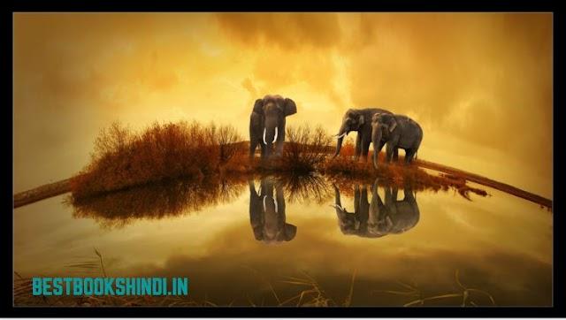 Hindi Story - खरगोश और हाथी की हिंदी स्टोरी