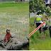 Ngakak! Hindari Razia Polisi, 2 Cewek ABG Nyemplung Sawah