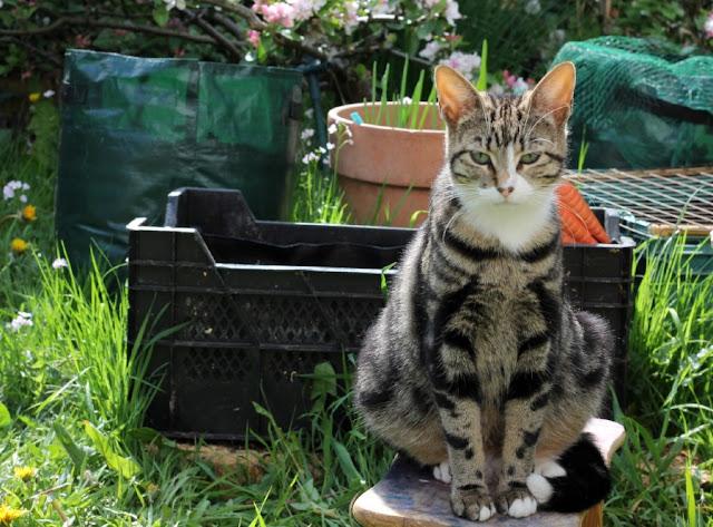 Cat near Vegetable Containers