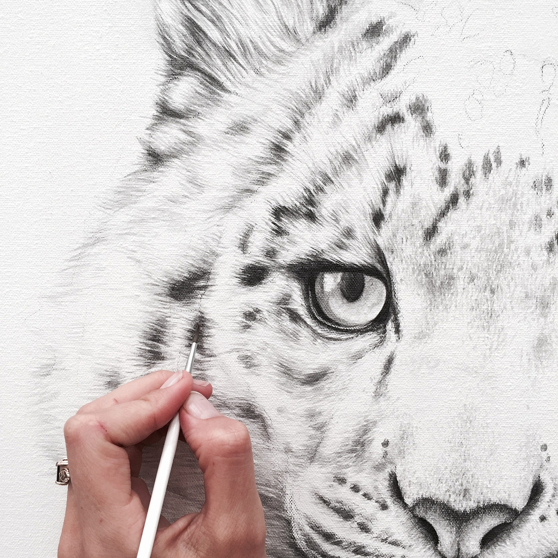 04-Snow-Leopard-Detail-Jaimee-Paul-Mixed-Media-Animal-Drawings-and-Paintings-www-designstack-co