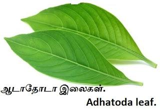 adhatoda leaf