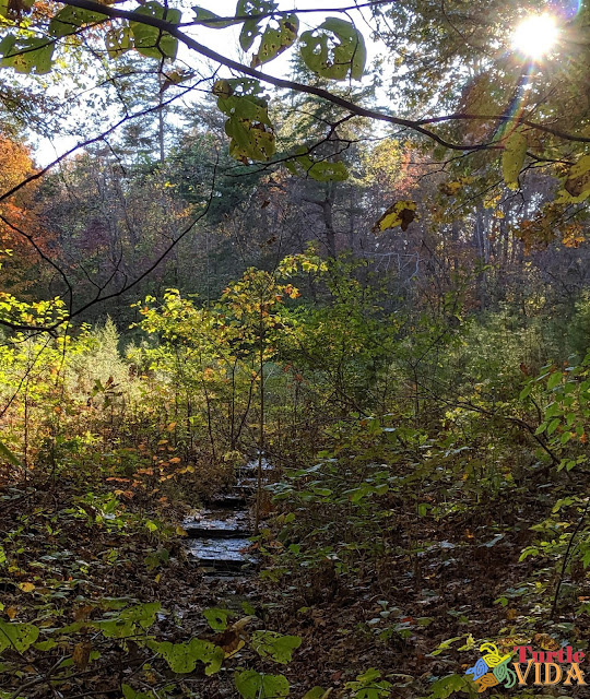 View of fall foliage as seen from the Mammoth Cave Railroad Hike & Bike Trail