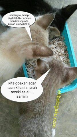 kittens feeding, Royal canin food, Feeding dry food kittens, Kucing pembawa rezeki