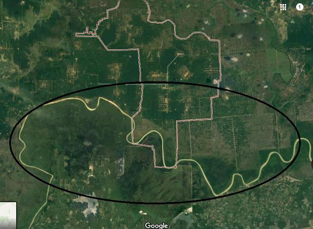 Buaya Kali Pedada Lampung
