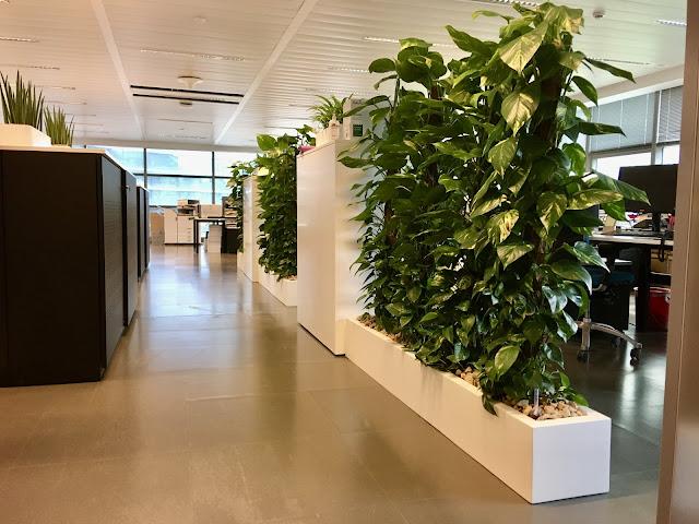Planten voor bedrijven in Brussel Vlaams Brabant Leuven Limburg Hasselt Prijzen op aanvraag