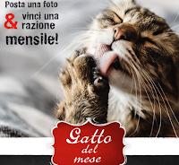 Logo Concorso Leonardo '' Il gatto del mese di giugno 2020'': vinci gratis fornitura mensile