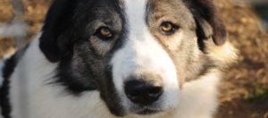 Εσείς τους ξέρατε; Αυτοί είναι οι 6 ελληνικοί σκύλοι! (ΦΩΤΟ)