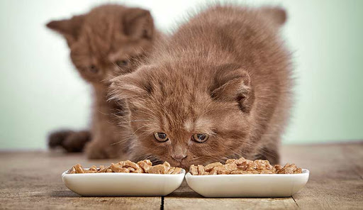 What are the 10 best healthy foods for domestic cats? | cat and dogs