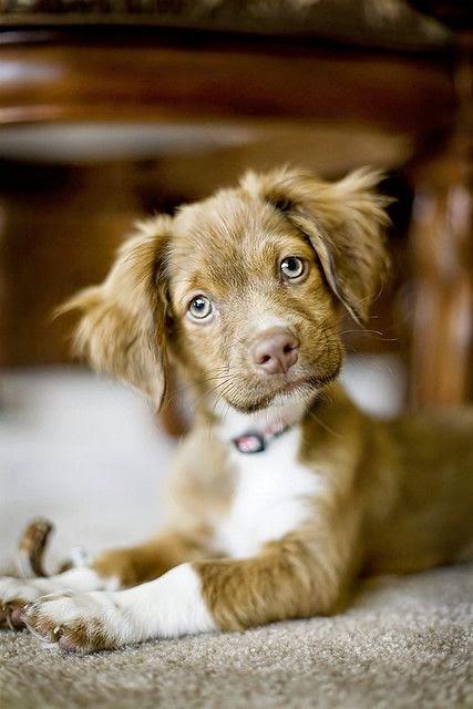 3 Cute Amazing Puppies