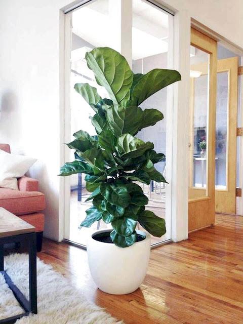 Indoor Plant Nurseries