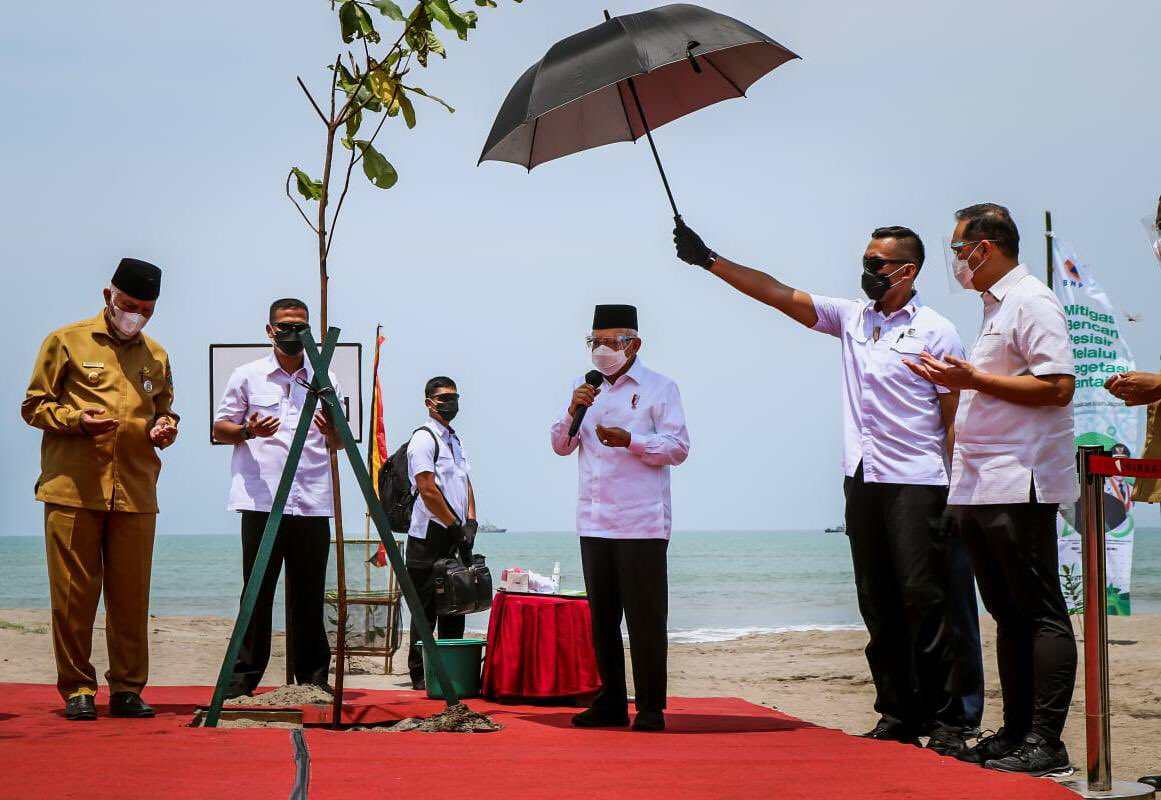 Ma'ruf Amin: Saya Menanam 300 Bibit Pohon Ketapang