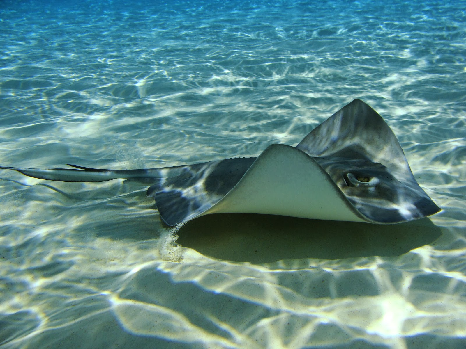 Sub Sea Systems — Our World The Stingray Bay Program