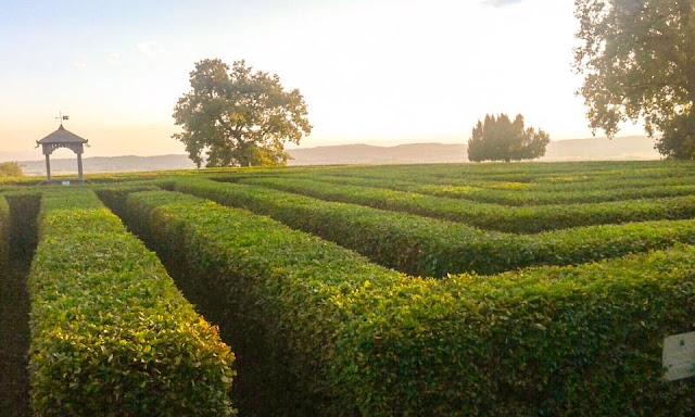 labirinto-masino-caravino