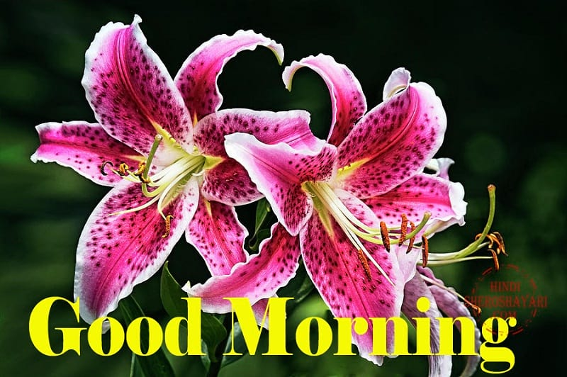 Good Morning Blessings With Stargazer Lily Flowers