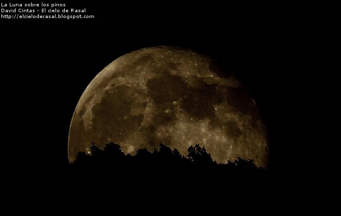 La luna sobre los pinos