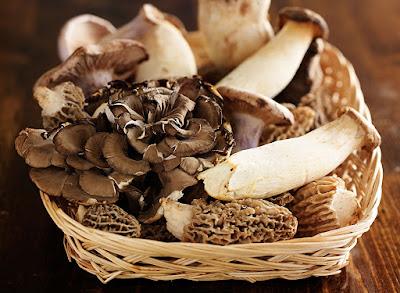 Mushroom Supplier Company in Bhilai