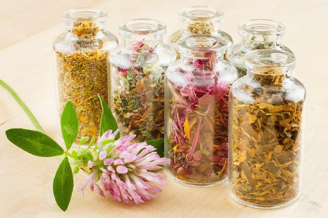 Tanaman Herbal untuk Memperbesar Payudara