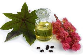 los top 7 aceites naturales