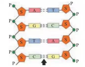 Biomolecules textbook solutions class 11