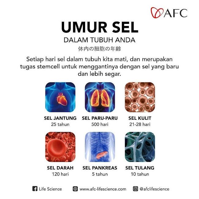 Agen Jual: Suplemen SOP 100+, SOP Subarashi Manfaat, di Maluku Tengah