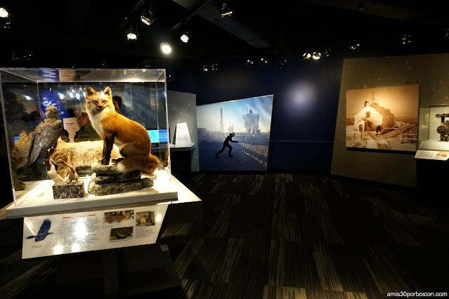 Museo Extreme Mount Washington en el Sherman Adams Building