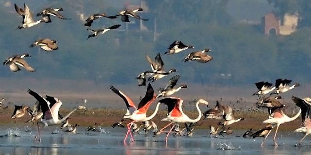 जश्न-ए-भोपाल की आतिशबाजी के शोर से नाराज प्रवासी पक्षी भोपाल छोड़ गए | BHOPAL NEWS