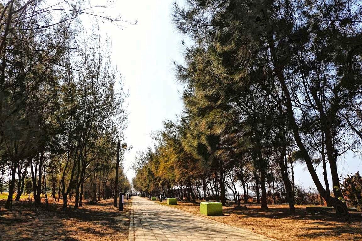 嘉義|新岑公園|距離200多公尺便能看見黑面琵鷺及各種鳥類|環境生態的寶地|布袋鎮|景點