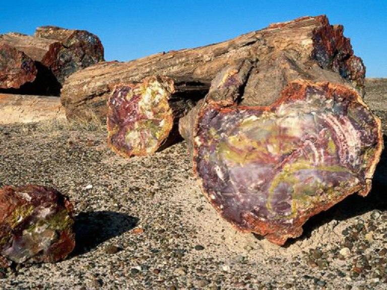 Petrified Forest National Park Navajo and Apache County 8