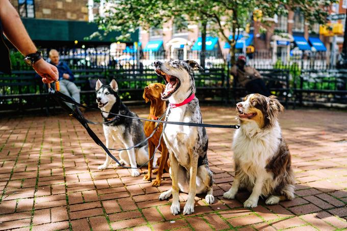 養狗狗要注意的事