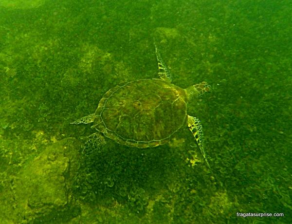Tartaruga na Baía Sueste - Fernando de Noronha