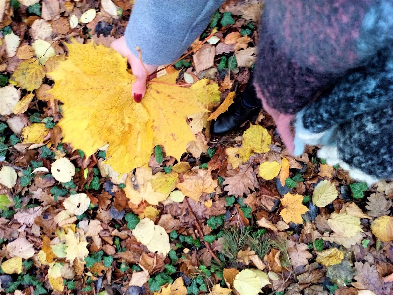 Jesienny spacer last minute| Propozycje miejsc do odwiedzenia