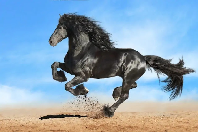 le-plus-beau-cheval-du-monde