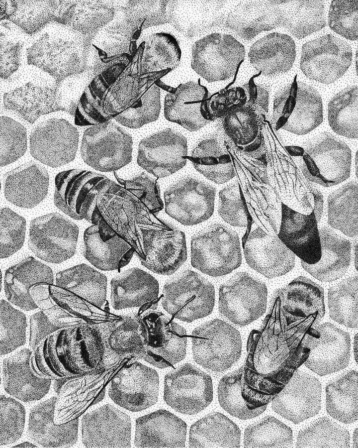 04-Queen-Bee-Carole-Levy-www-designstack-co