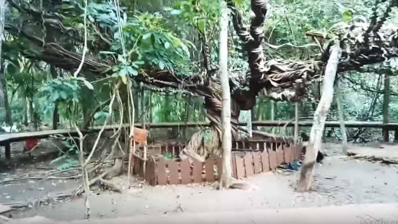 Tempat Wisata di Lamongan