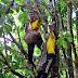 Tarikan Sungai Kodok, Hulu Terengganu Mampu Jadi Produk Pelancongan