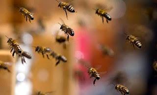 Mulher atacada por abelhas no Paraná