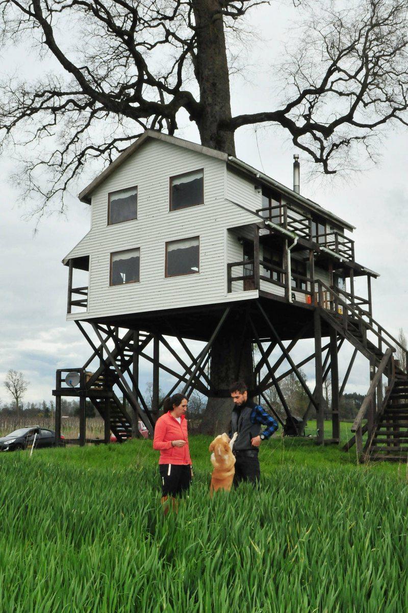Ingeniero arrienda una casa en un árbol