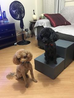 escadas para cães com luxação
