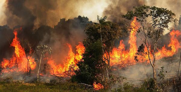 Ο Αμαζόνιος φλέγεται! Συγκλονιστικές εικόνες από την τεράστια οικολογική καταστροφή!