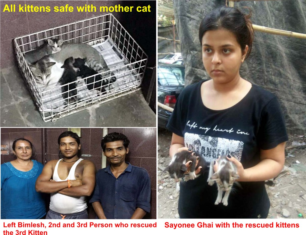 Peace for Animals Welfare Association: Successful Rescue : 3 lives
